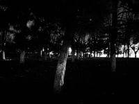 trees in night