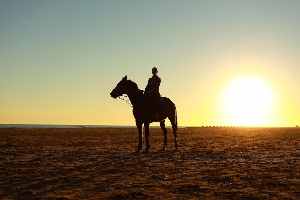 man riding brown horse during sunset