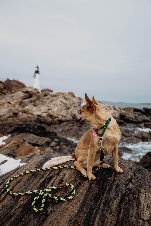 brown dog sitting on rock