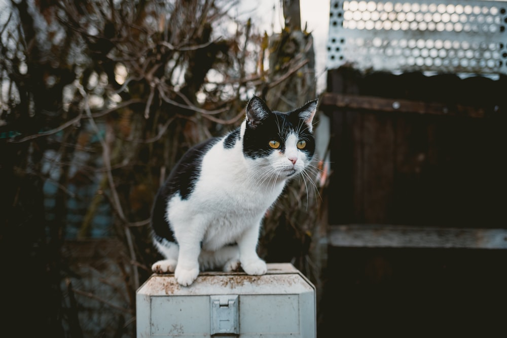 short-coated white and black cat sitting on gray metal box