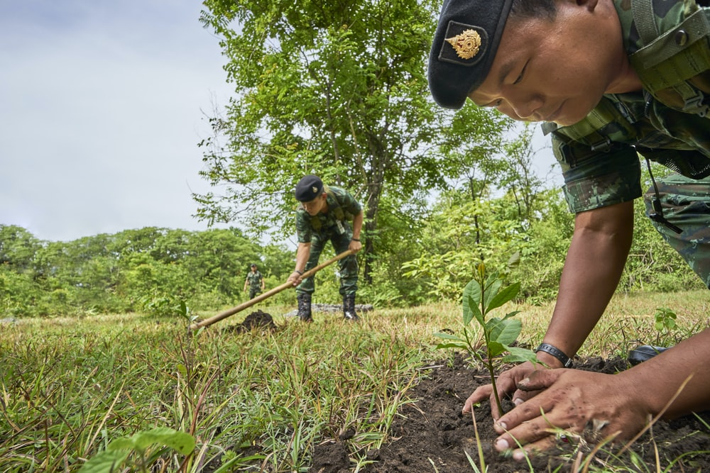 soldier planting tree during daytime
