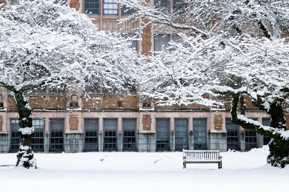 snow covered trees beside brown concrete building