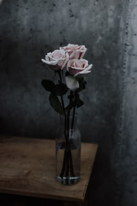 three pink roses in glass vase on table