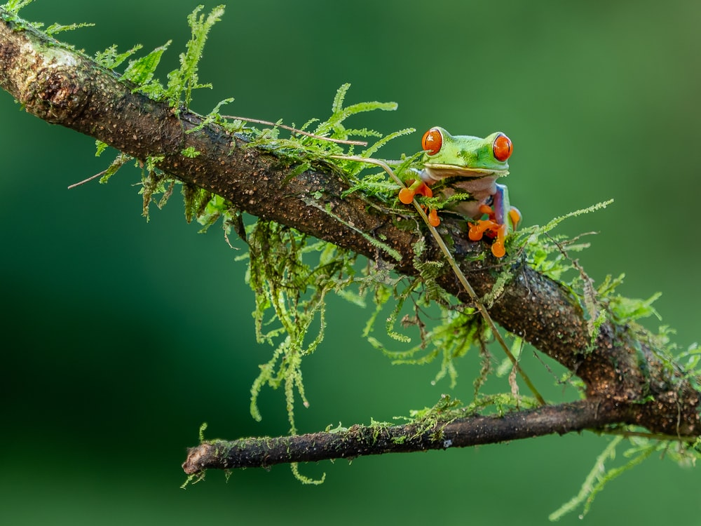 selective focus photography of green and orange lizard on brown stem
