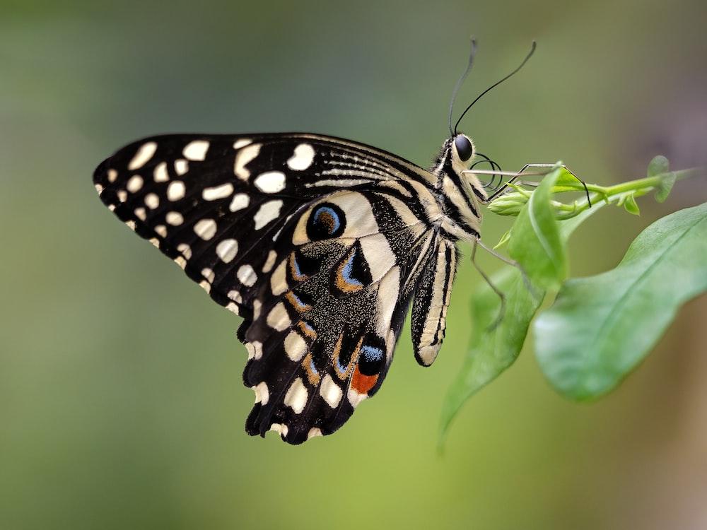 black butterfly perching on leaf
