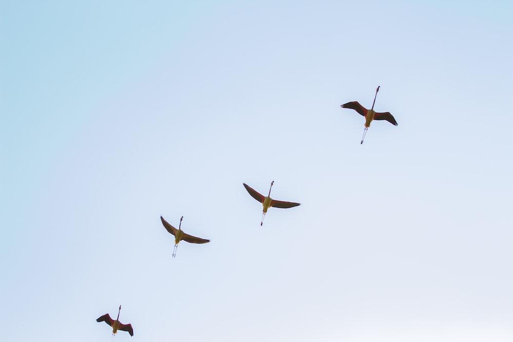 four black birds