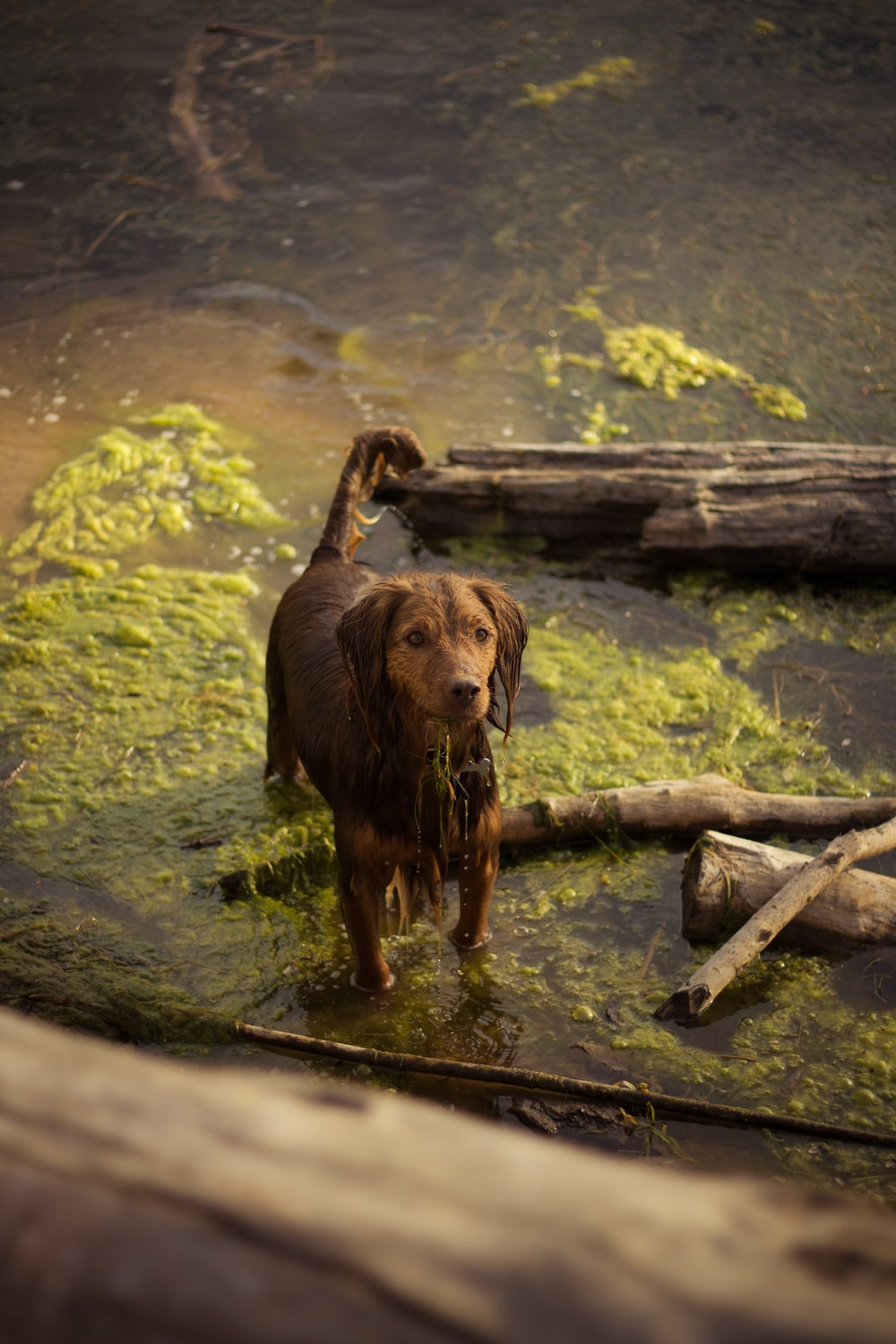 brown dog on body of water