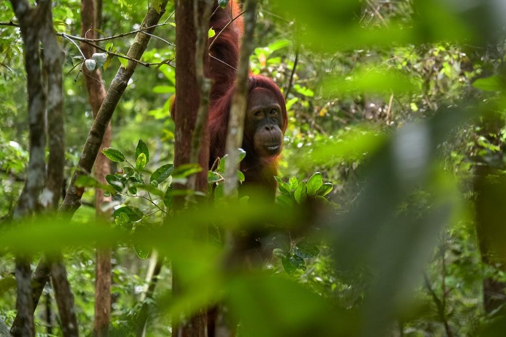 brown monkey on tree during daytime