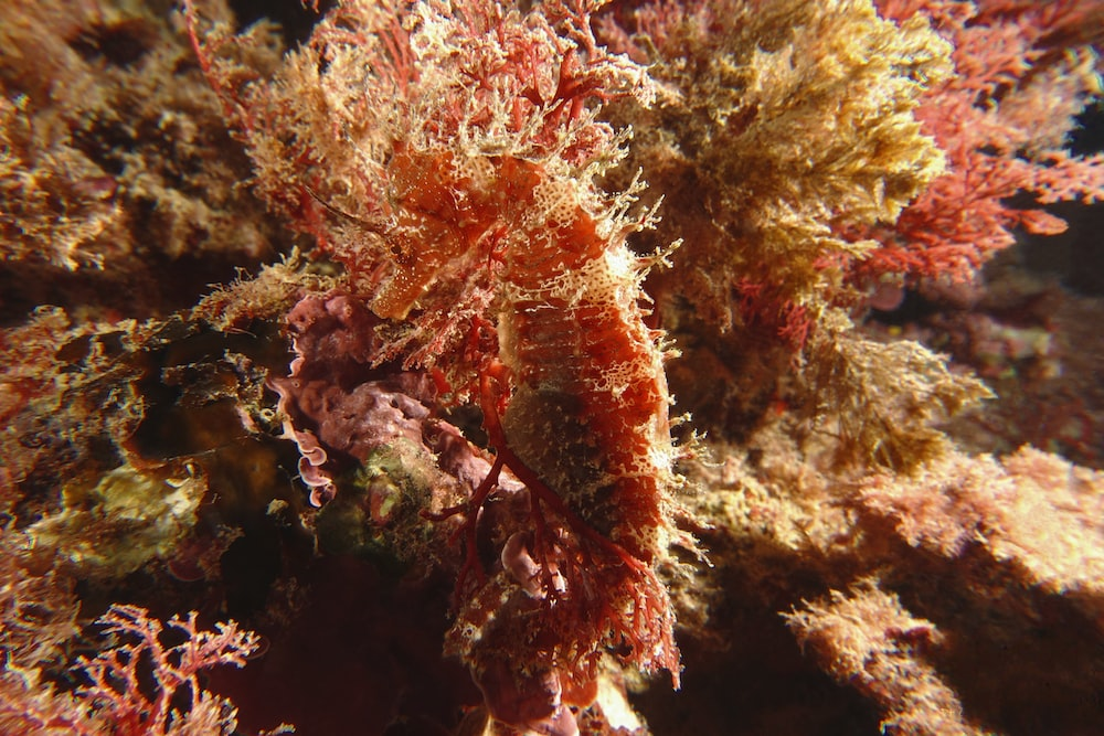 red and green coral close-up photo