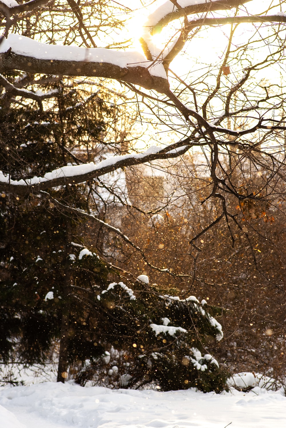 trees with snow during daytime