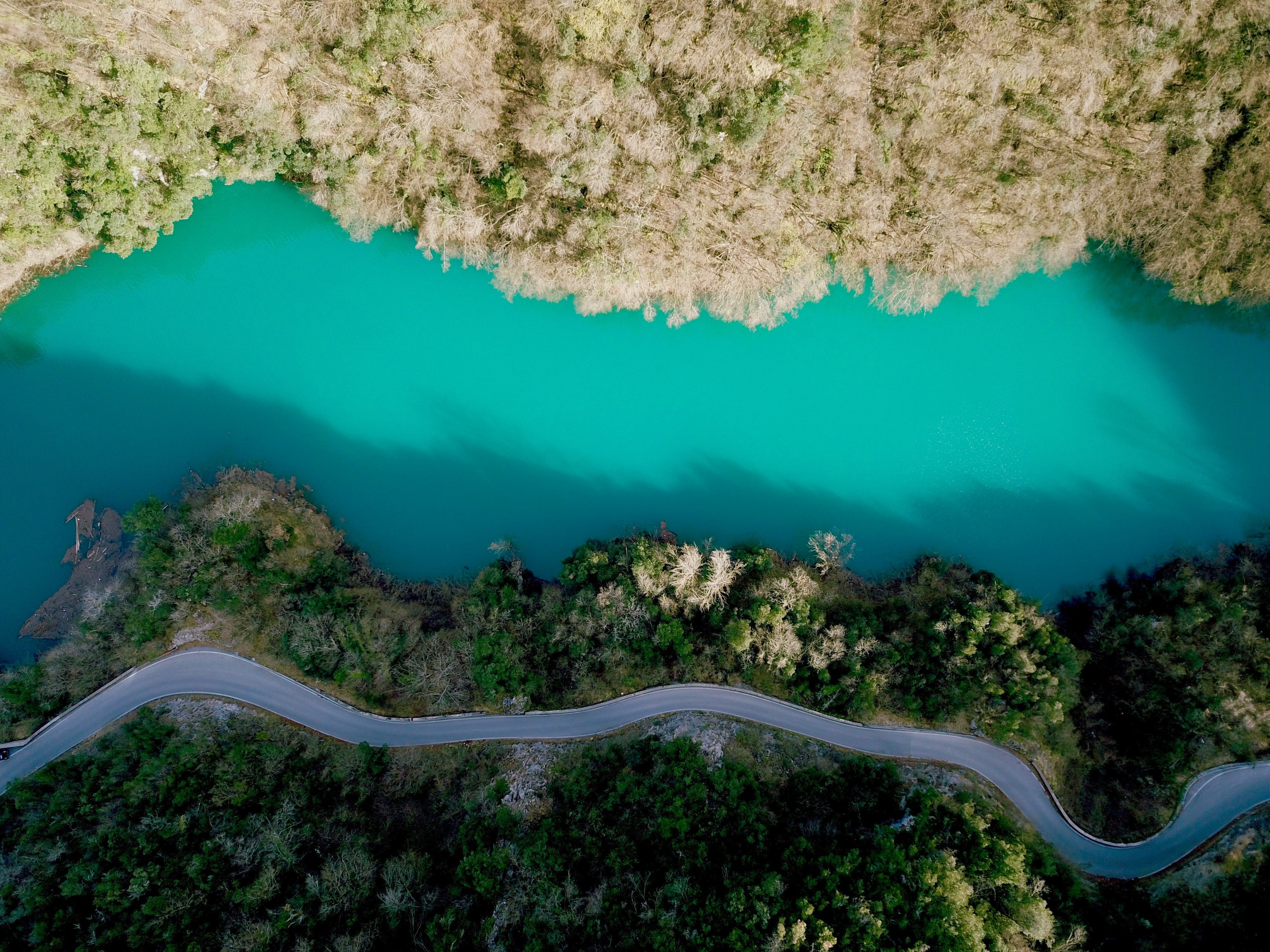 aerial view photography of lake between green trees