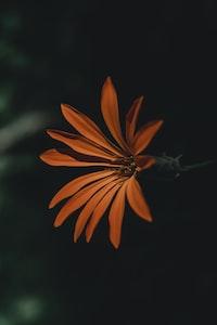 orange encrusted petal flower