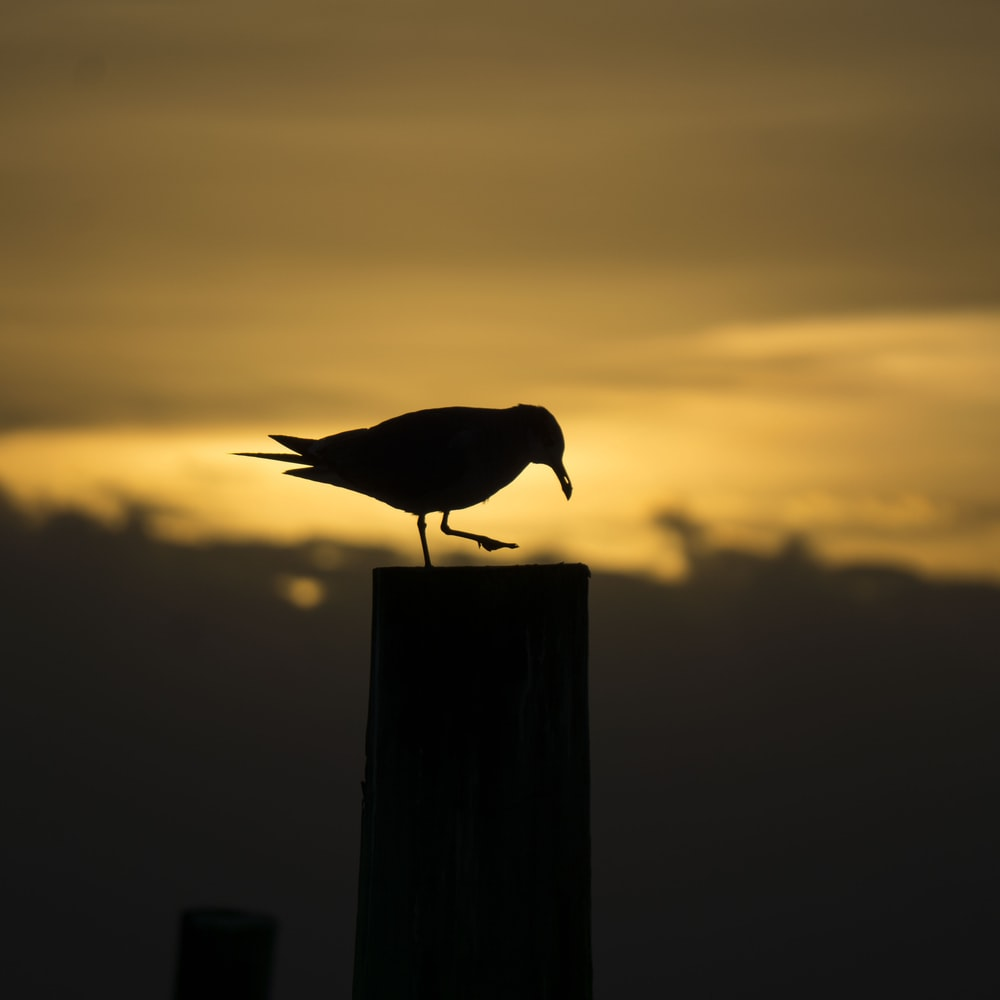 silhouette of bird standing on wooden stand