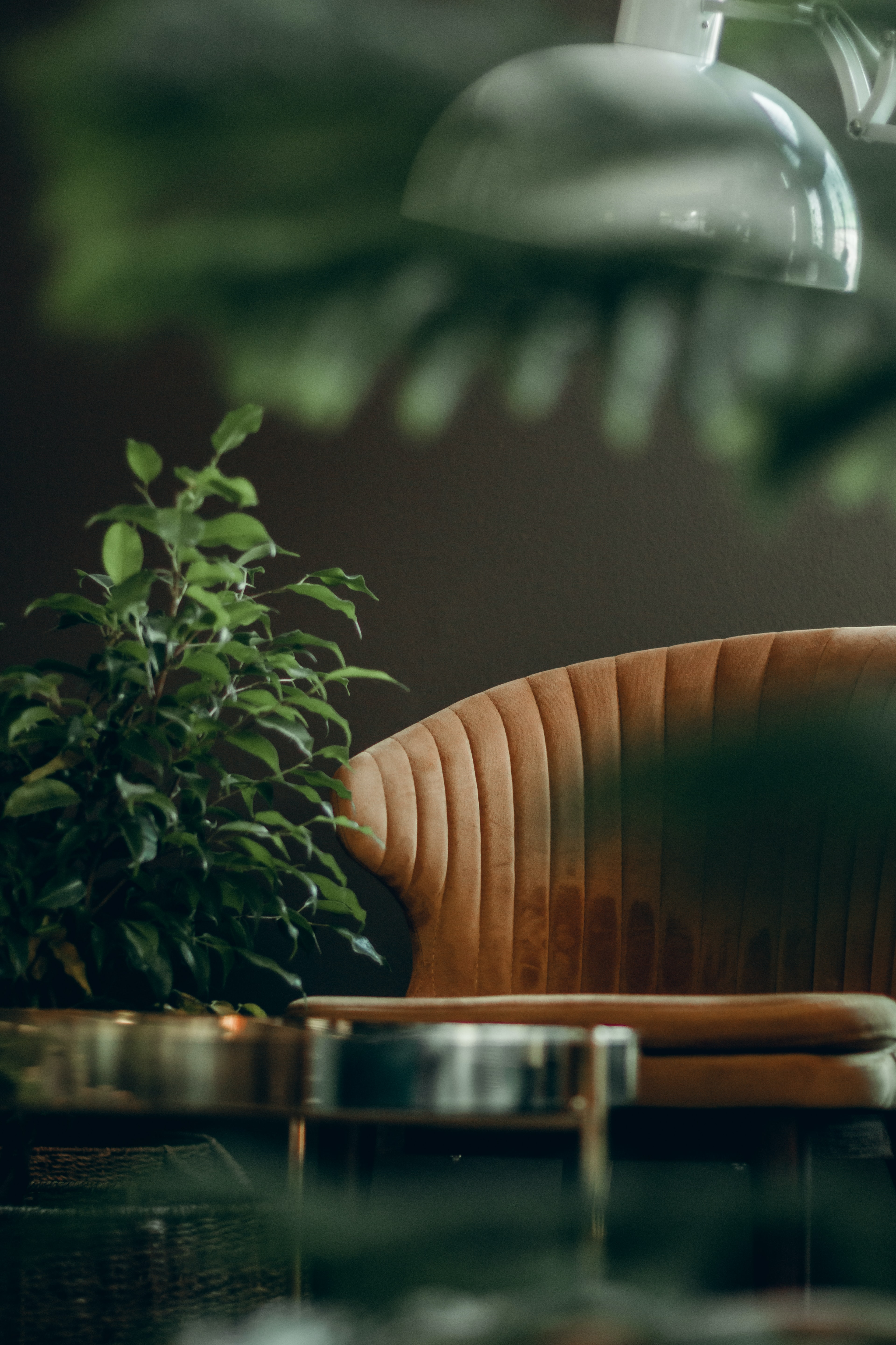 brown leather lounge chair beside green plant
