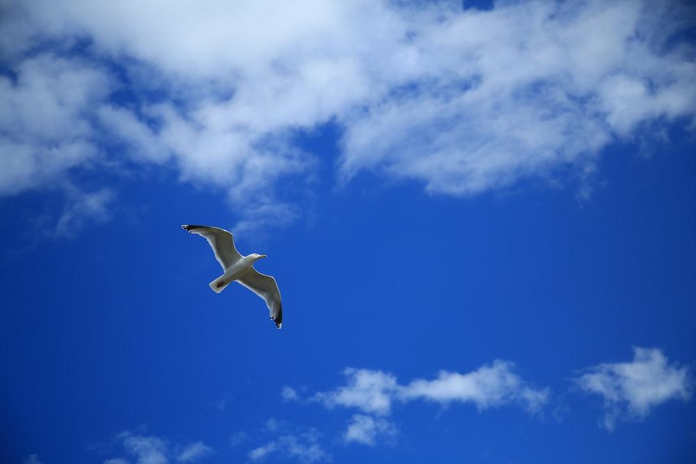 white albatross on flight under white cloudy sky