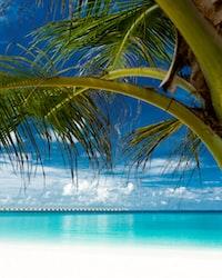 green palm tree near cam sea