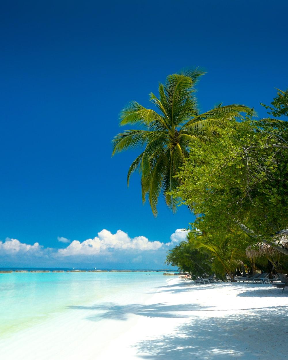 green coconut tree near seashore