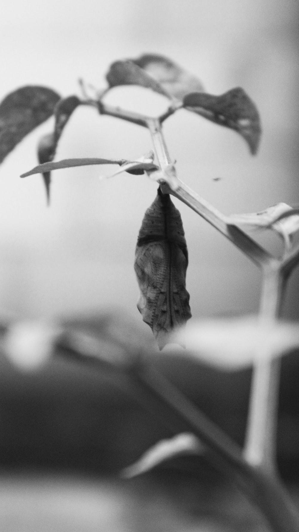 grayscale photography of gray animal