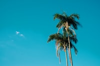 low-angle photography of palm trees under calm blue sky