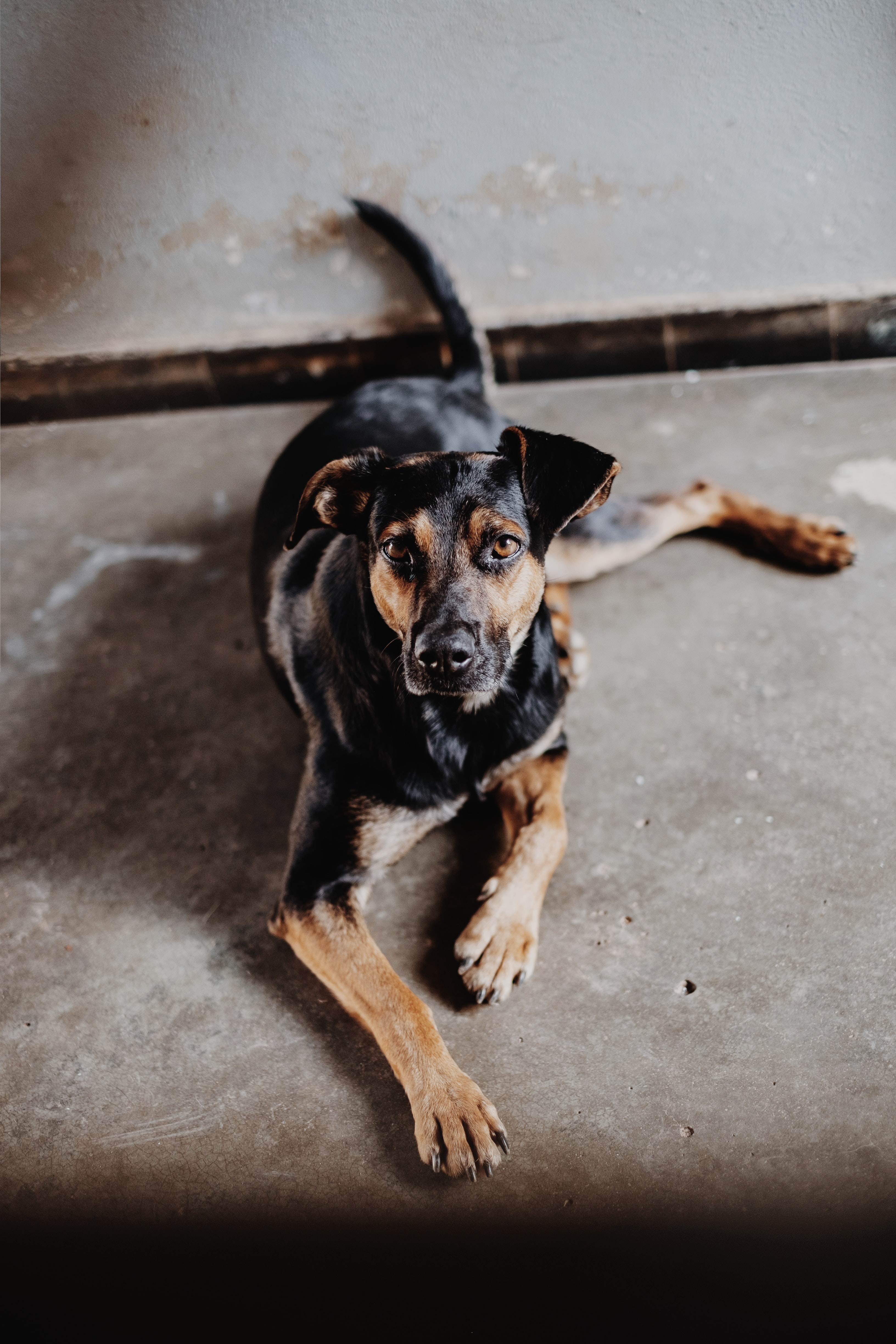 adult black and tan dog on gray surface