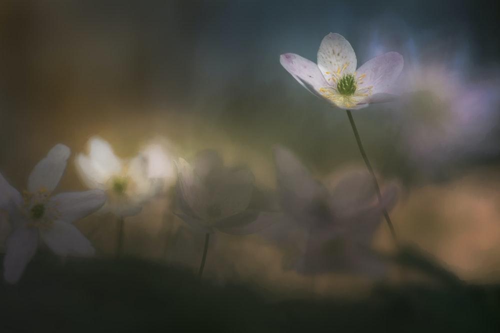 white 5-petaled flower