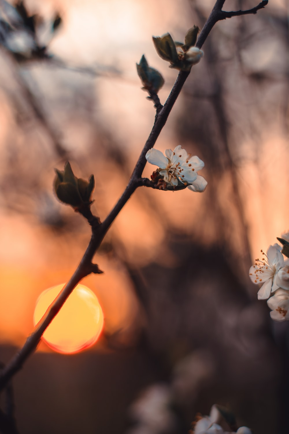selective photo of white petaled flower during sunset