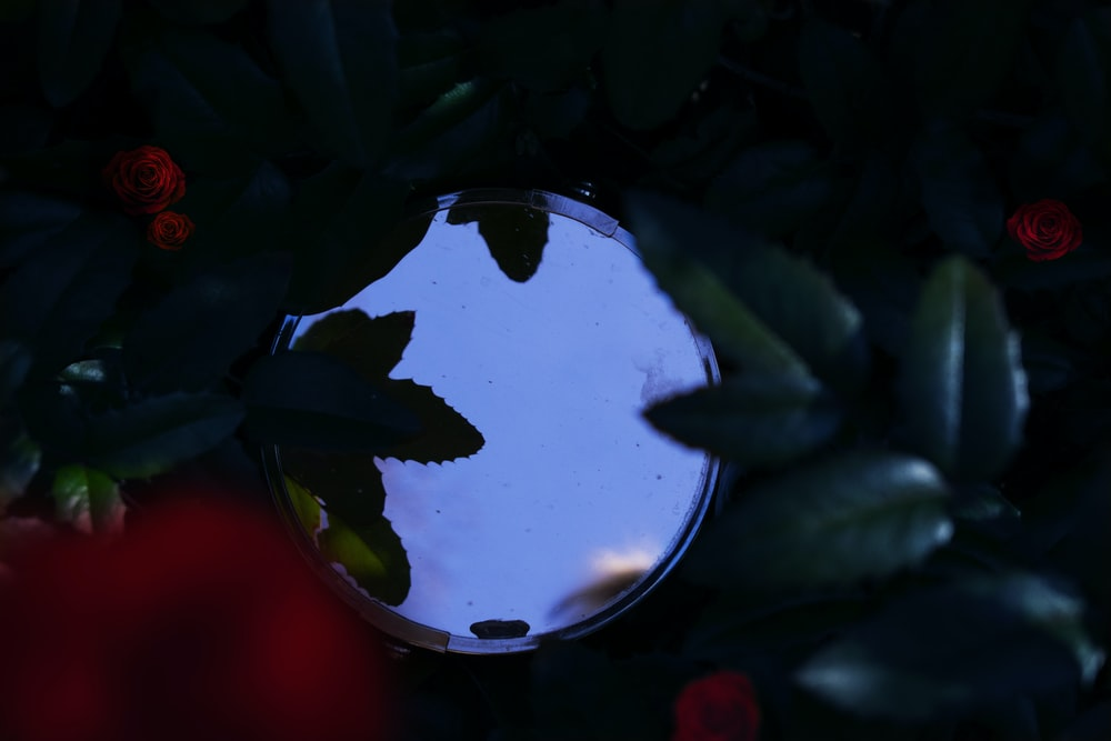 round mirror in between red and green plants