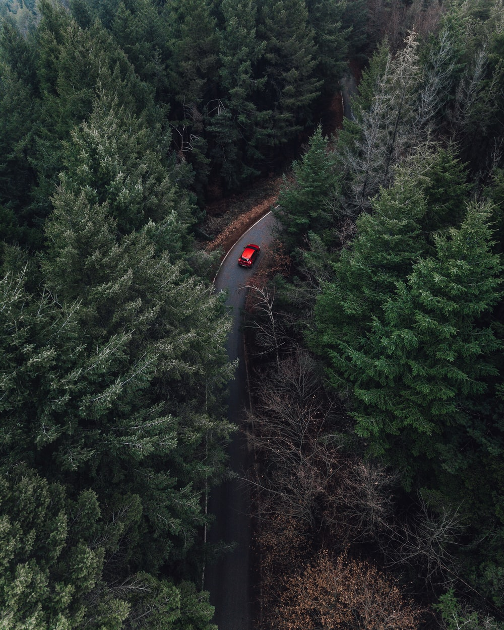 aerial view of red car on street between pine trees