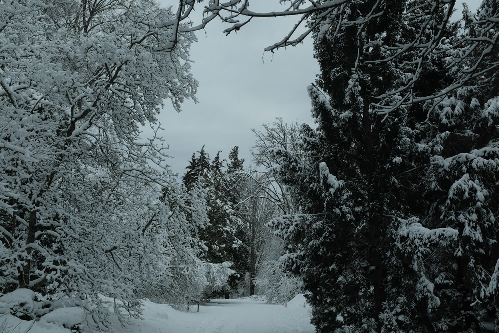 snow covered forest at daytime