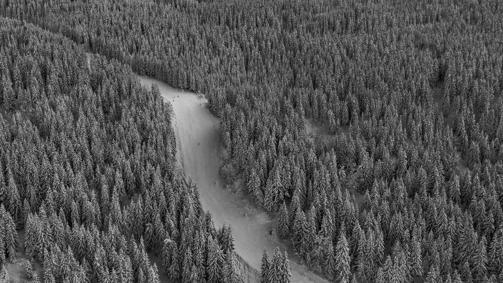 high-angle of road between pine trees in grayscale photography