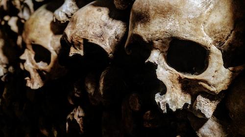 Skulls in the Hollow
