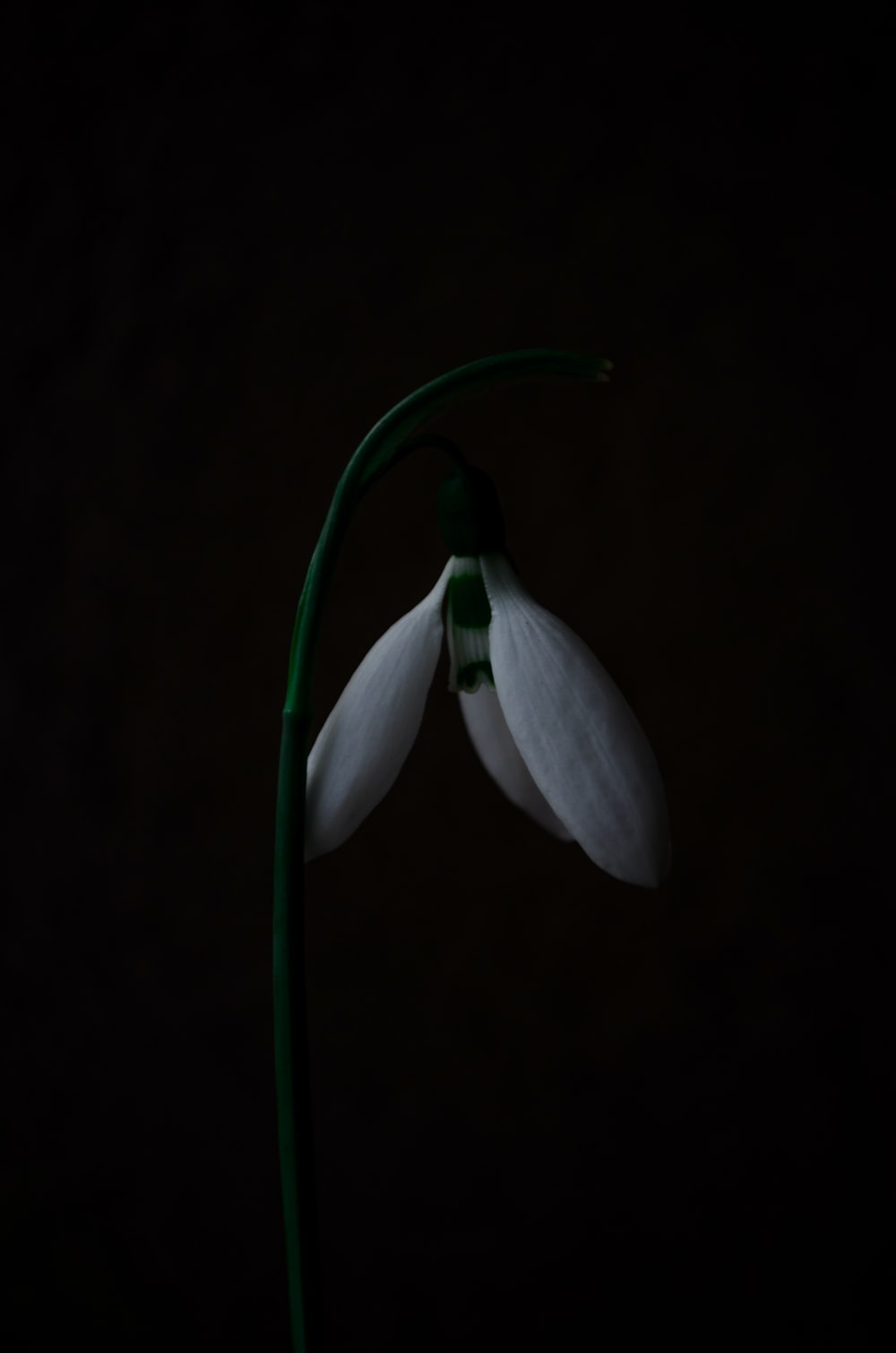 down-facing white petaled flower down