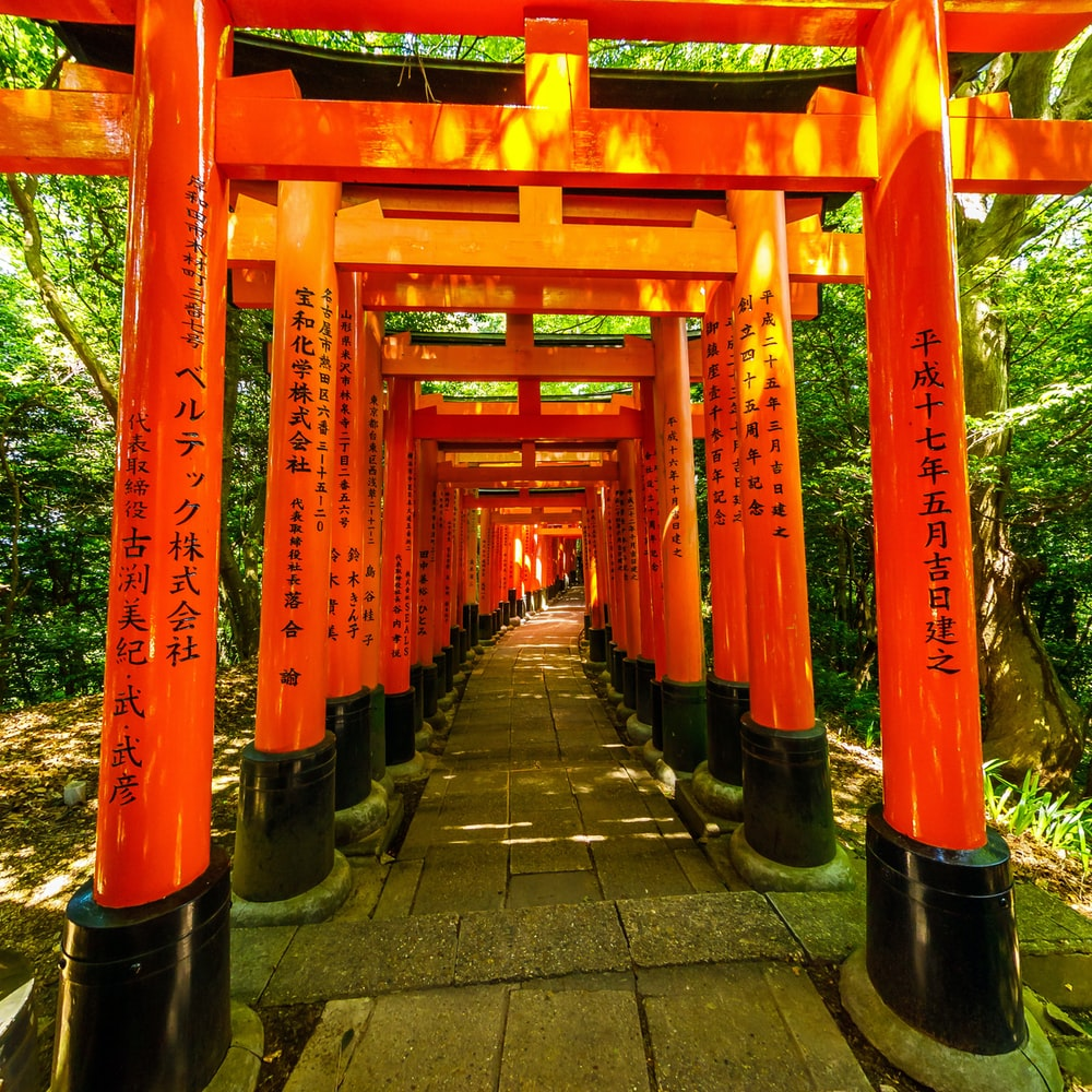 orange and black torii
