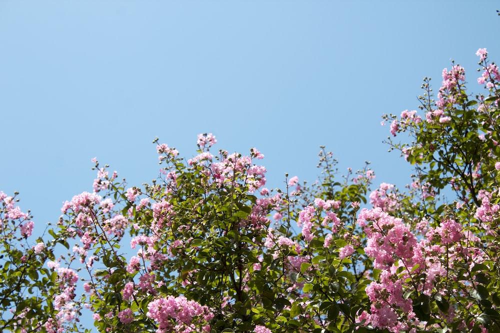 pink-petaled flowers under blue sky during daytime