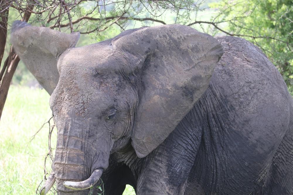 black elephant under tree