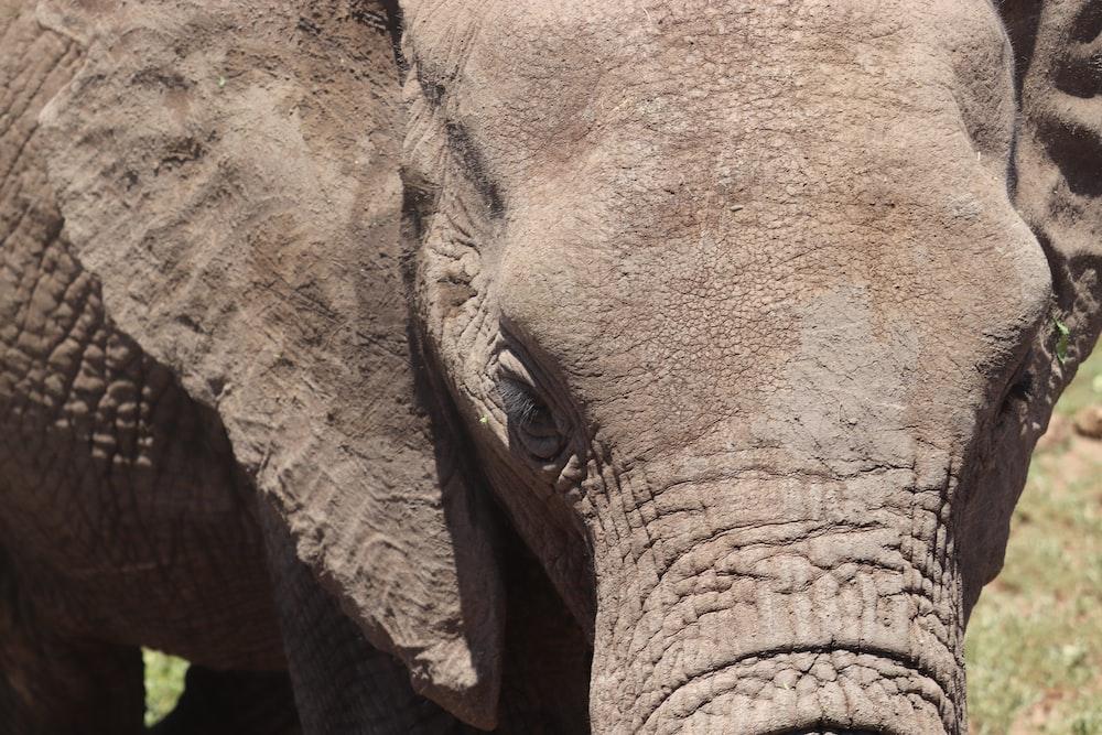 close view of elephant fa