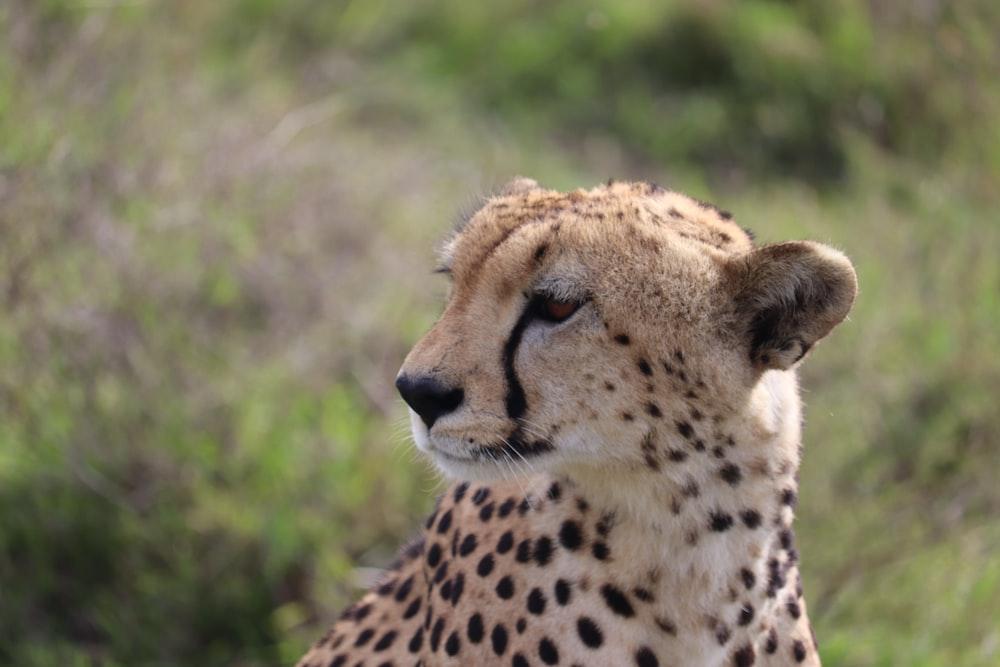 cheetah beside plant during daytime