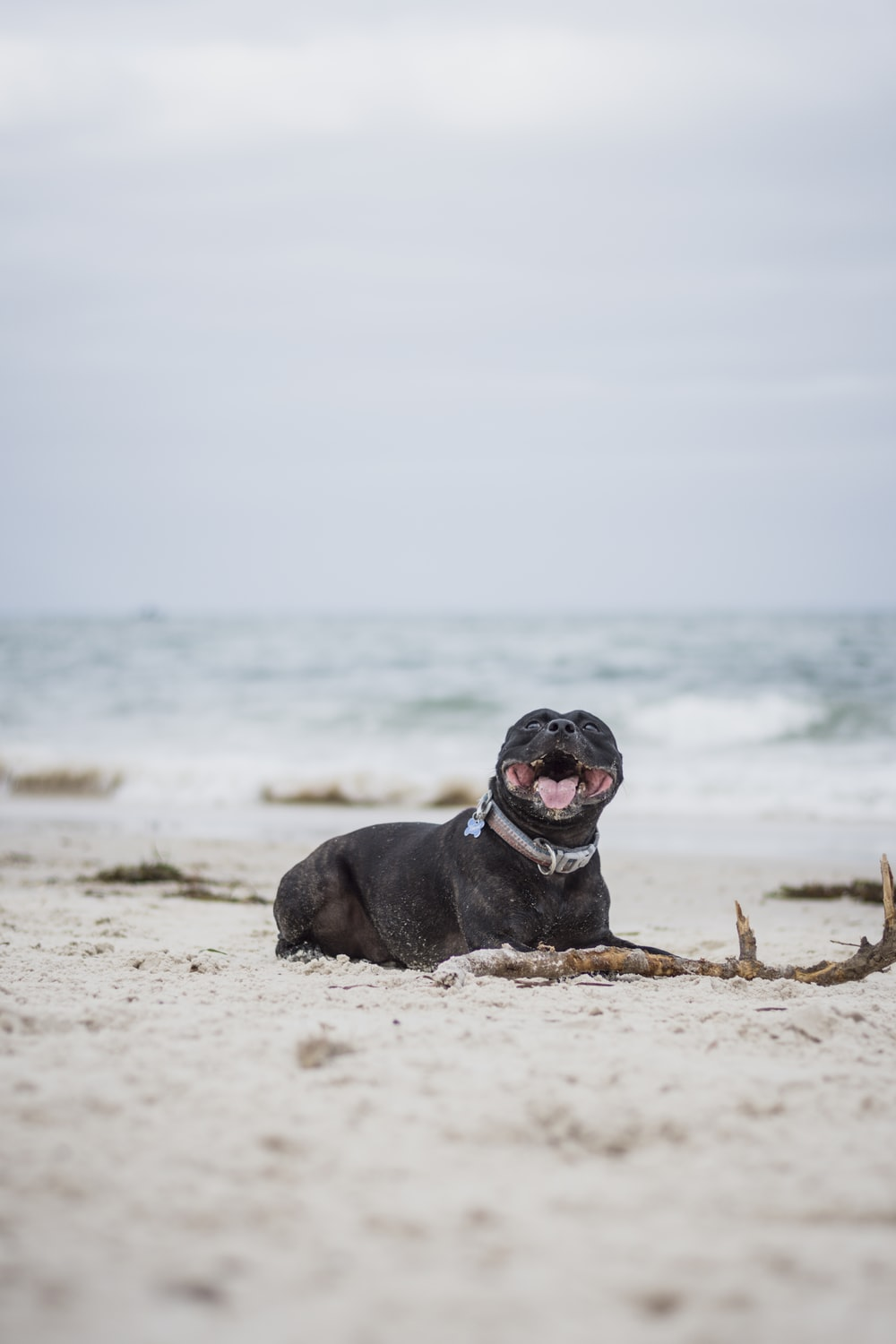 short-coated black dog lying on seashore during daytime
