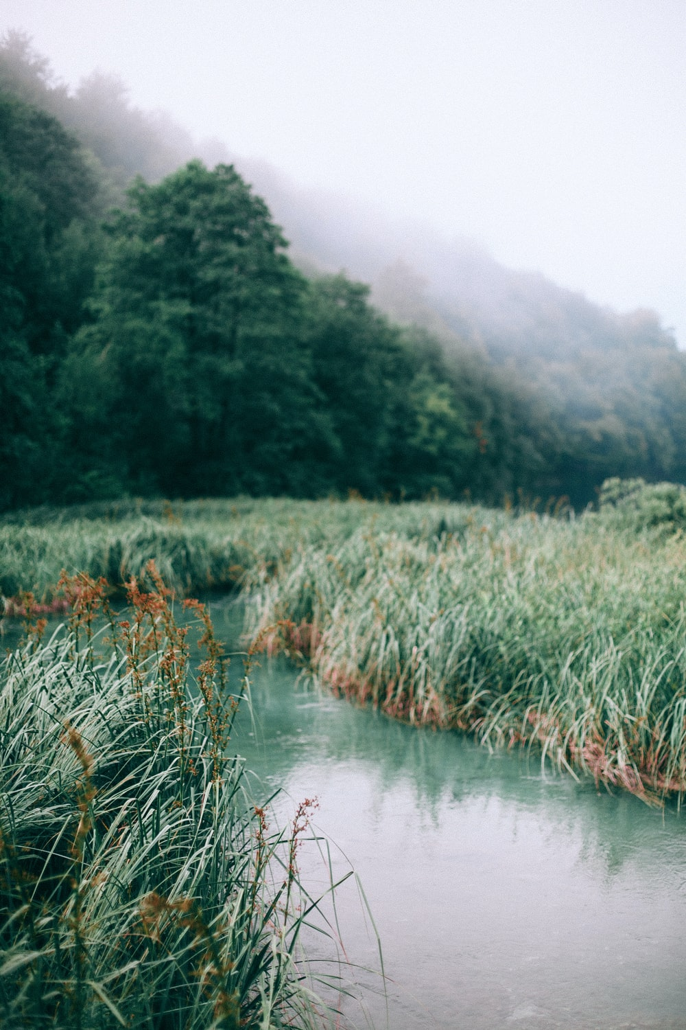 green grass with river flowing in between