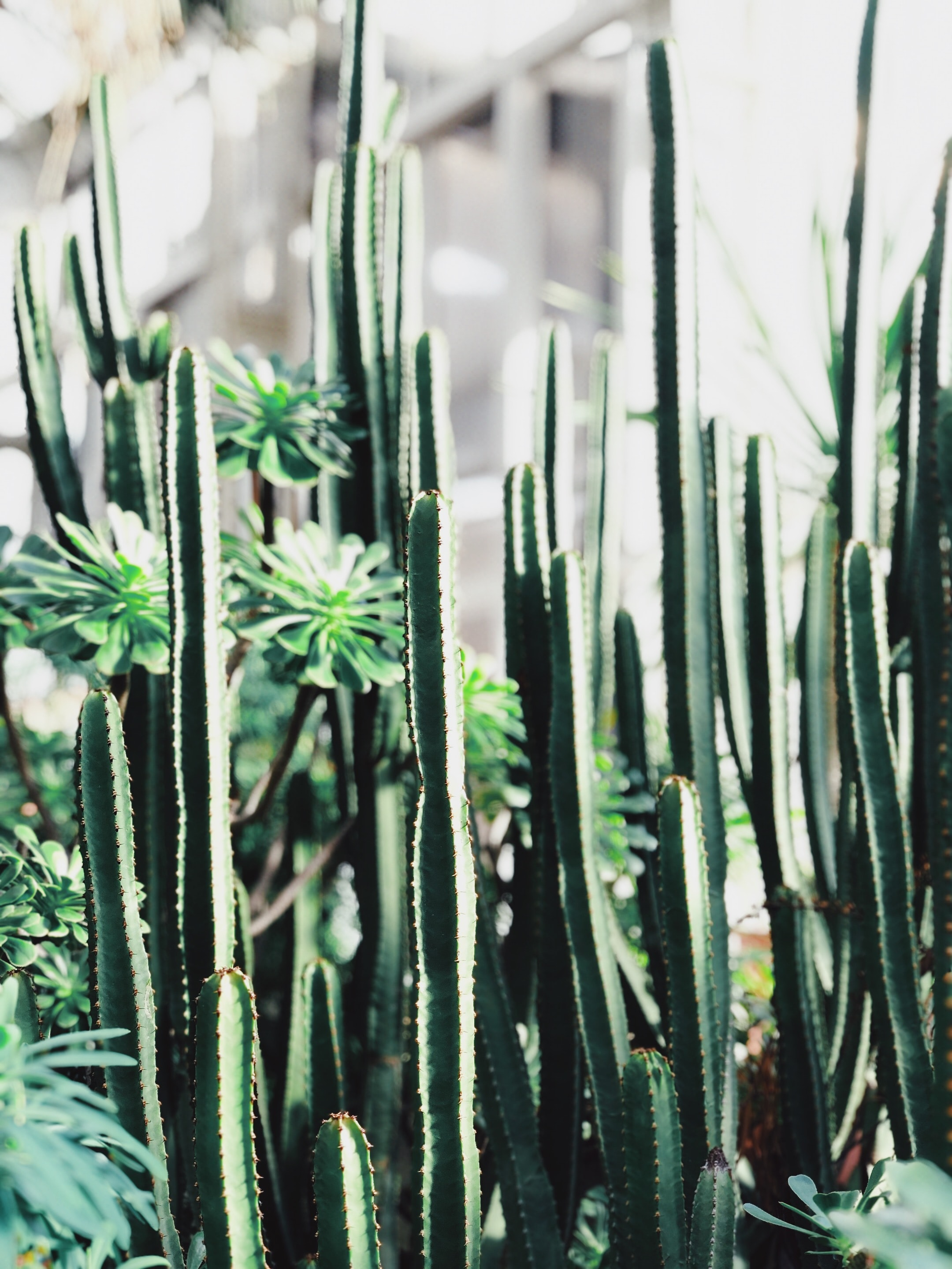 selective focus photography of cactus plants