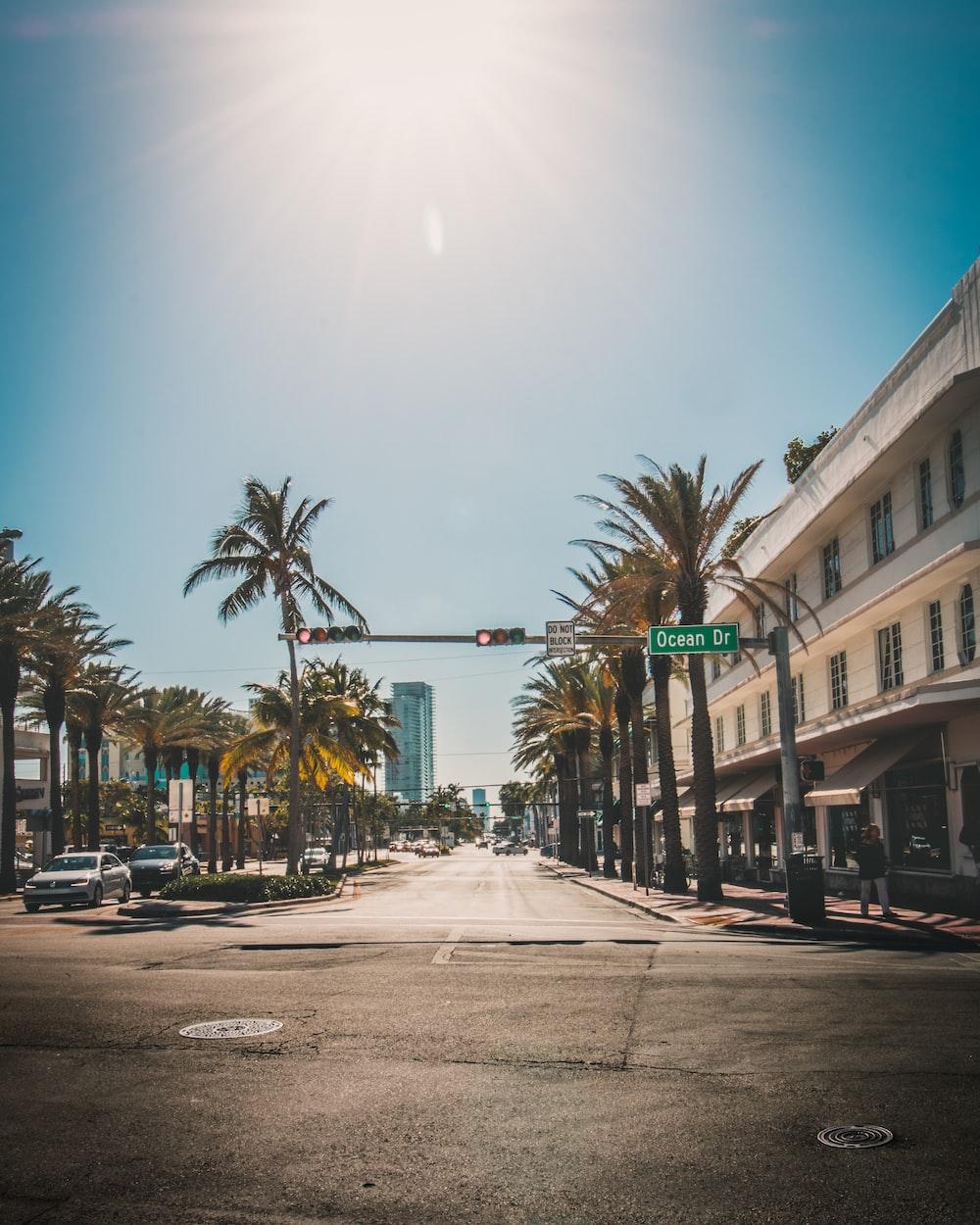 traffic light beside palm tree during daytime