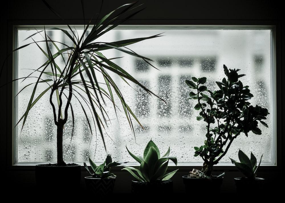 green indoor plants beside window during daytime