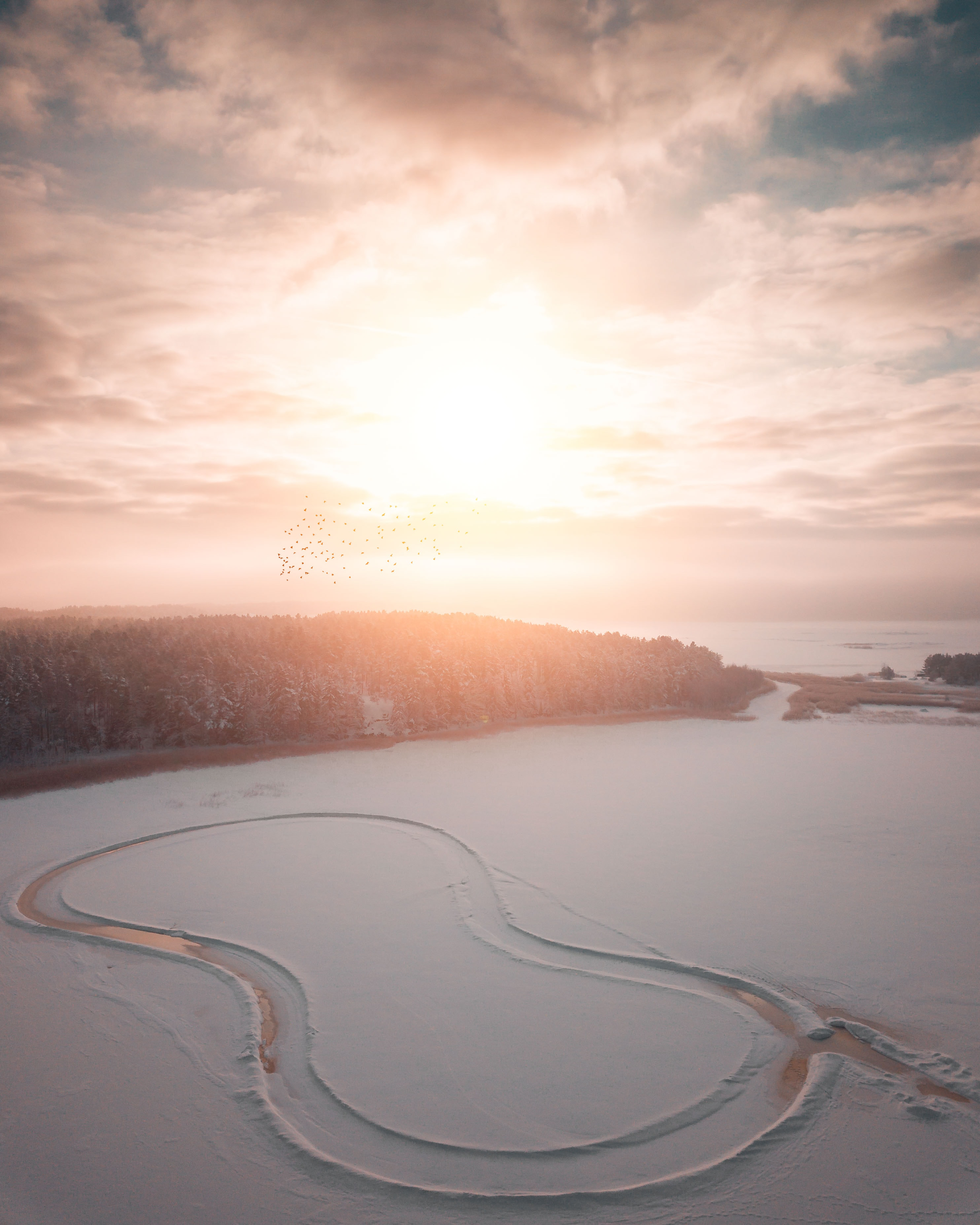 snow covered ground during golden hour