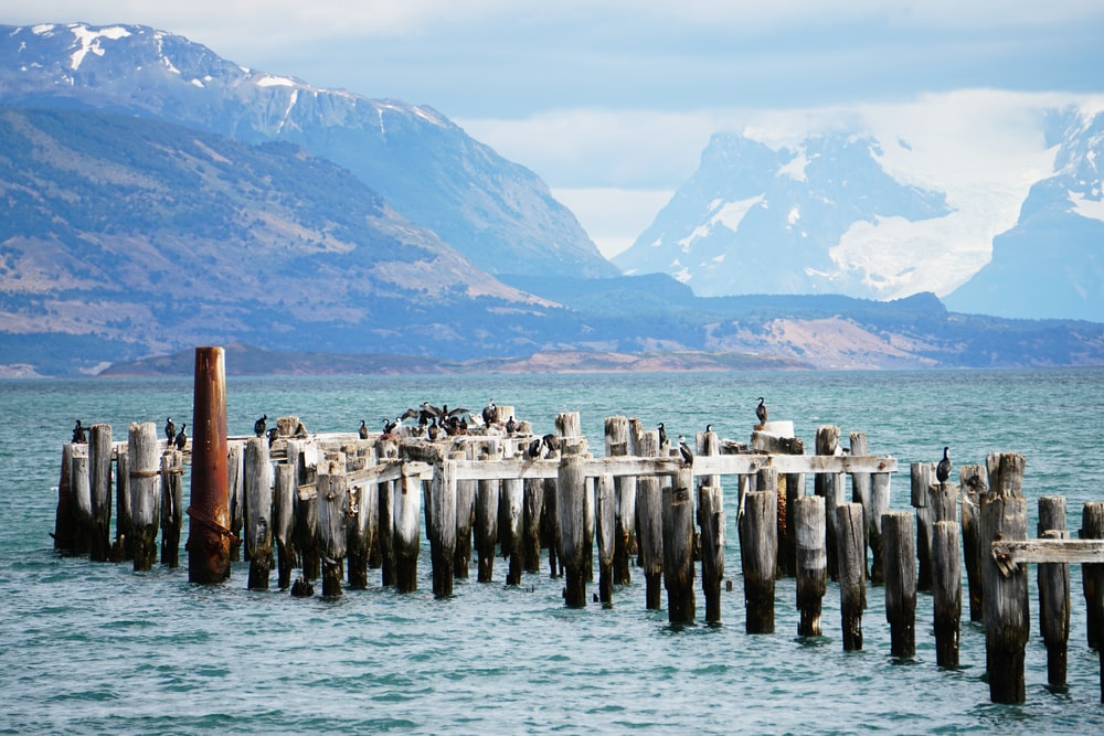 gray sea wooden posts near snow covered mountains during daytime