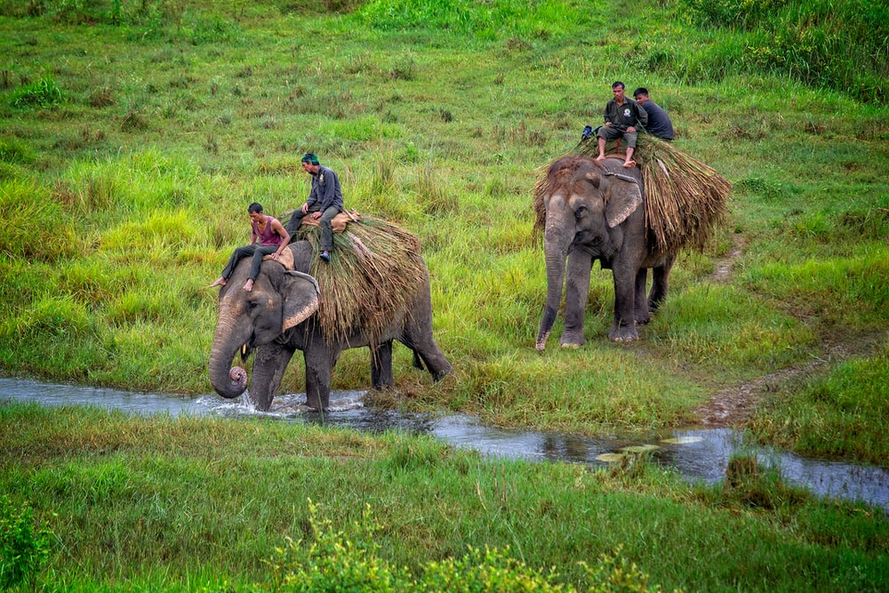 two person riding elephant
