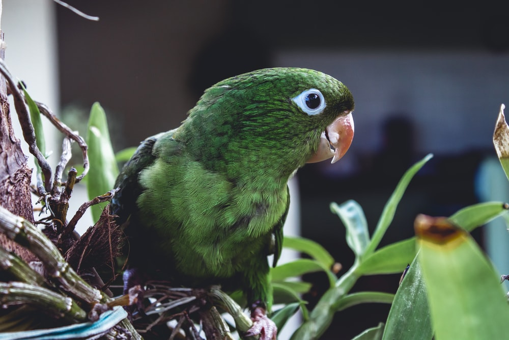 green bird on brown plant