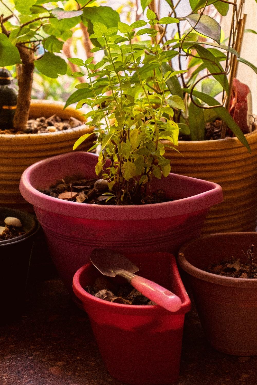 shovel on red plastic pot near indoor plants