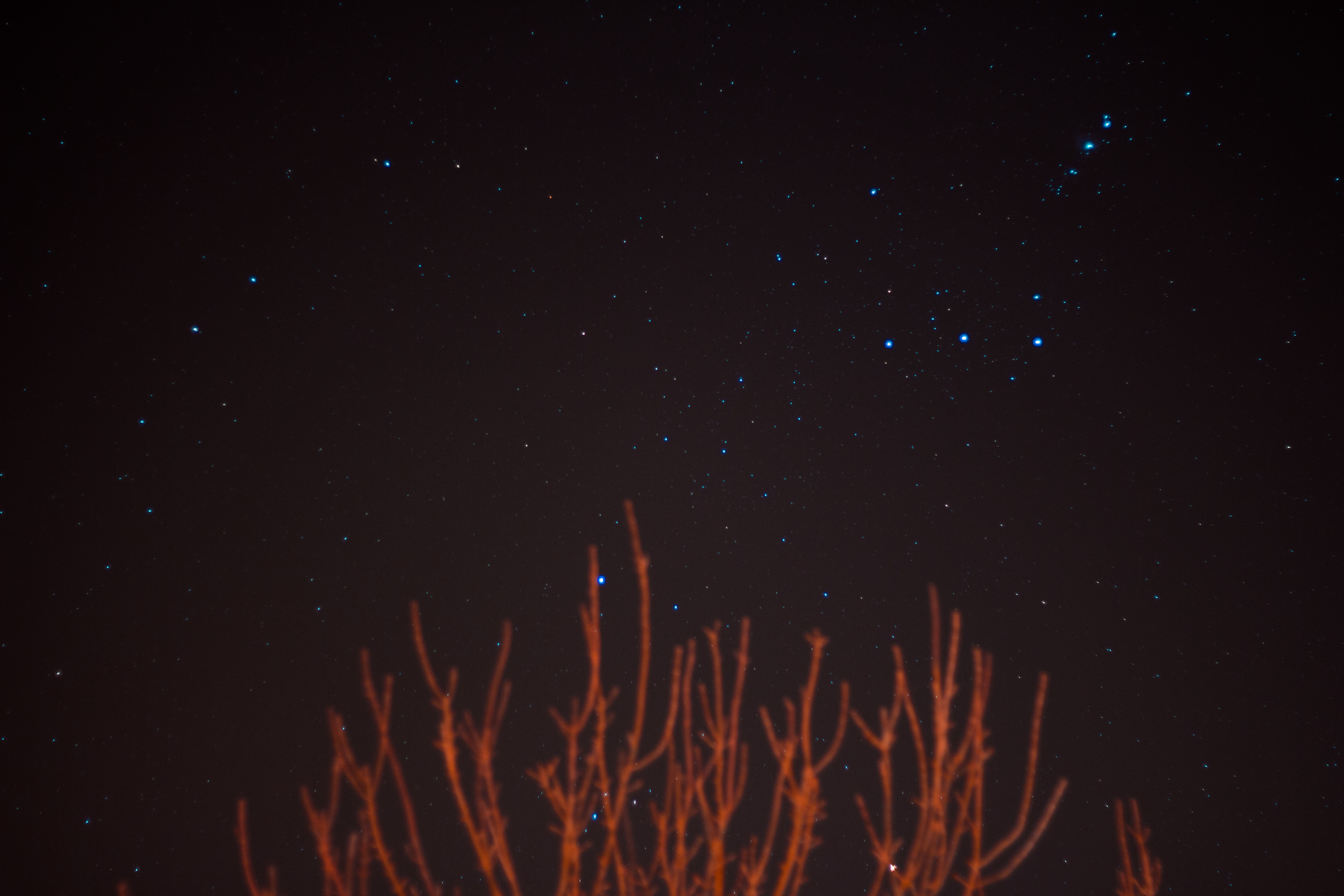 brown bare trees over blue stars at night
