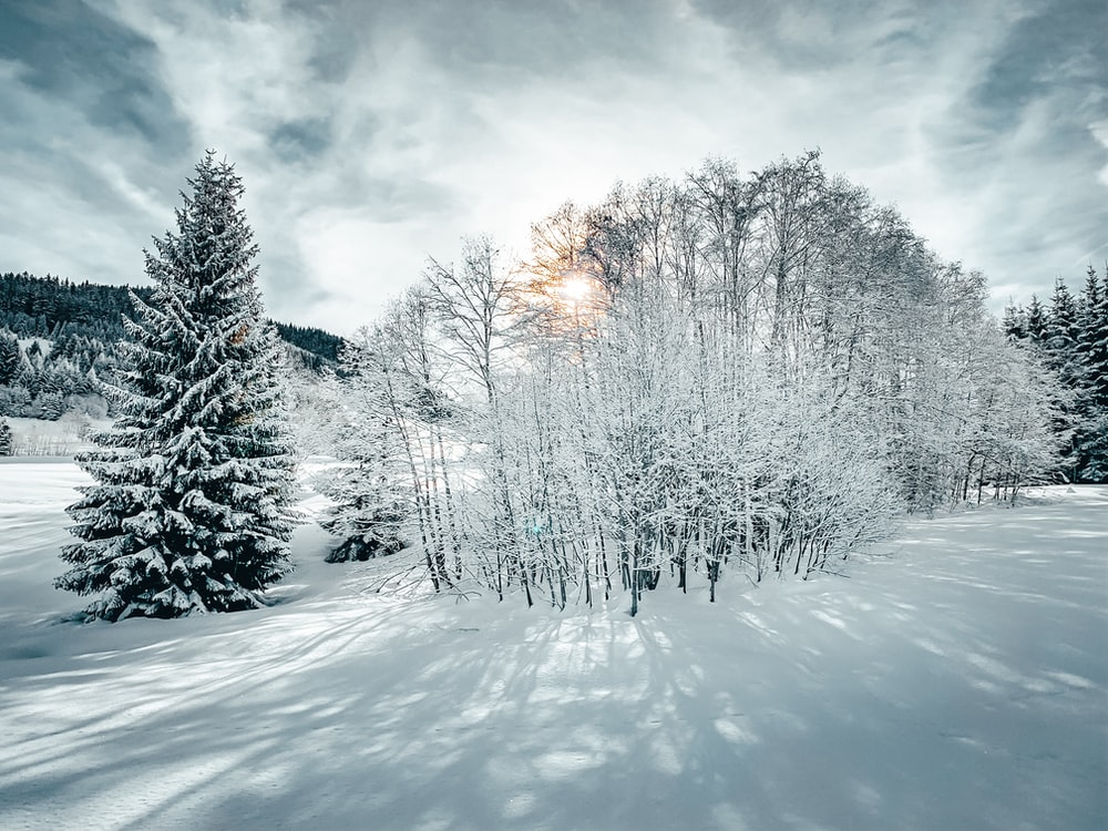 trees covered with snow under cloudy sky