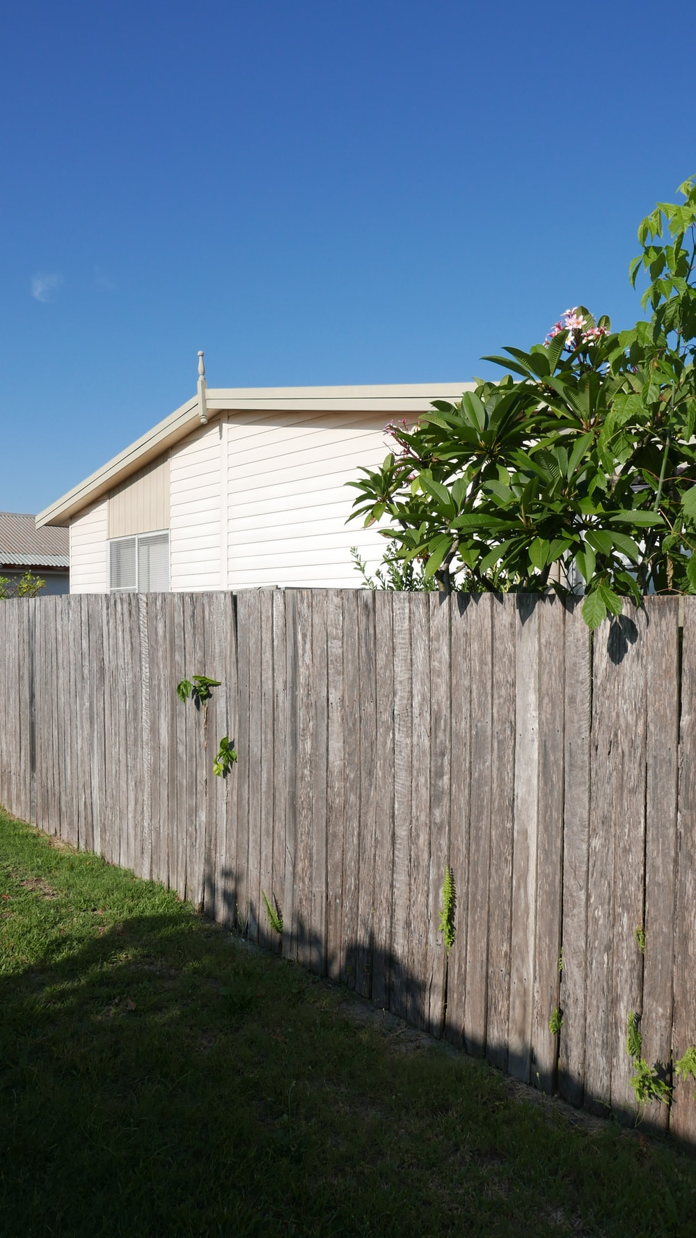 house near privacy fence and tree during day